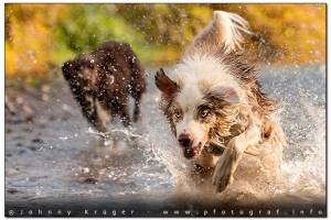 doggy-splash