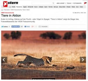 stern-gepard